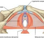 Incontinencia e hipopresivos